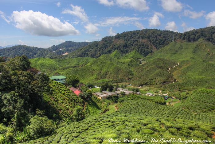 View of the Cameron Valley Tea Estate, Cameron Highlands, Malaysia