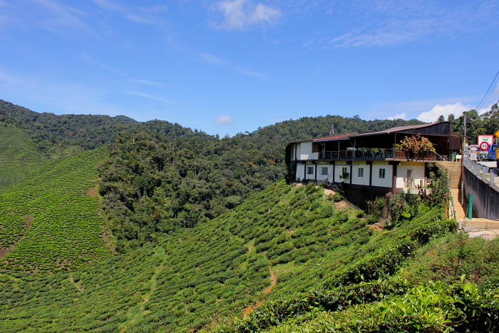 Cameron Valley Tea House, Cameron Highlands, Malaysia