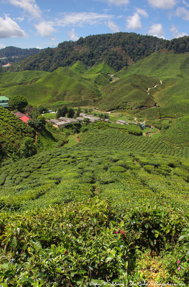 Cameron Valley Tea Estate in the Cameron Highlands, Malaysia