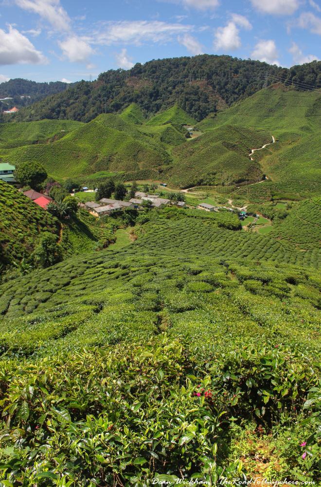 Cameron Valley Tea Estate in the Cameron Highlands, Malaysia