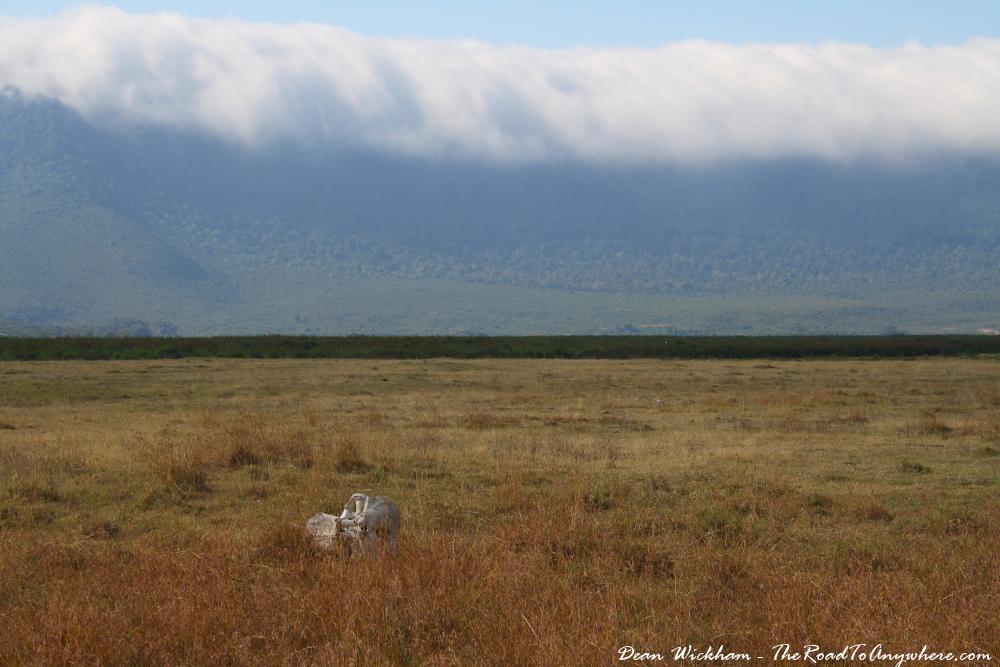 Elephant Graveyard in Ngorongoro Crater, Tanzania