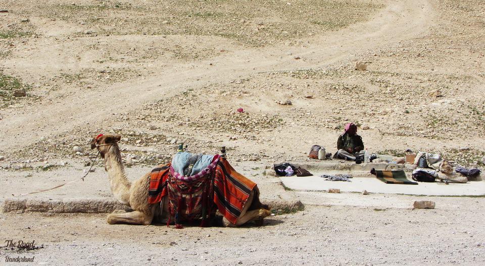 Camel & Bedouin, Wadi Qelt