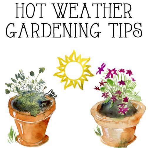 hot weather gardening tips