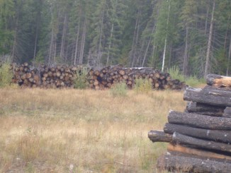 canoe mountain, logs, rotting, timber, lumber