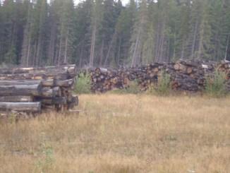 canoe mountain, logs, rotting
