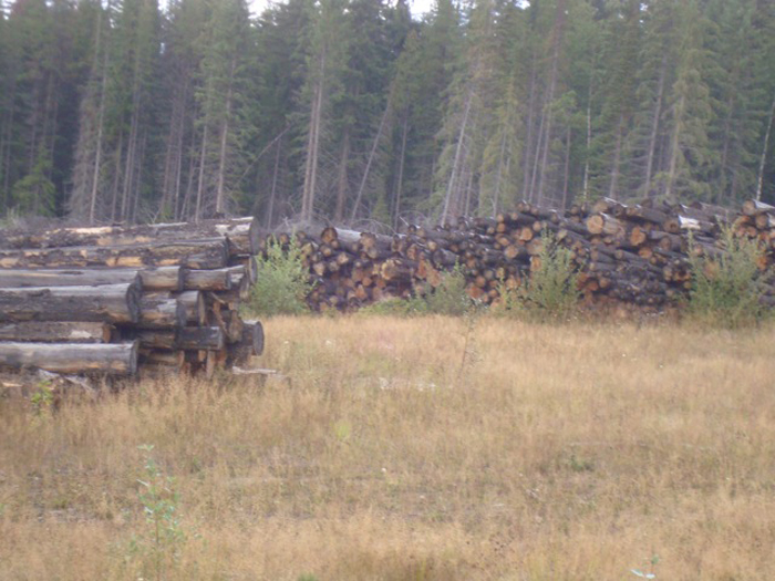 Robson Valley Timber Supply Area up for review