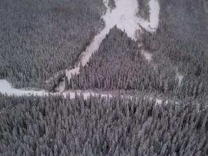 avalanche, snow, trees, mountain