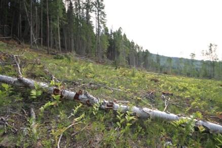 Mt Terry Fox Trail Logging (5)
