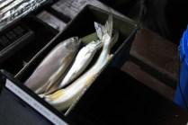 Valemount Marina Fishing Derby 2014 fish (16)