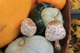 Fall harvest osadchuk pumpkin mushroom valemount (17)