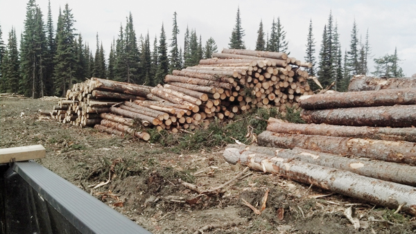 Loggers may have netted big profits under Community Forest rules