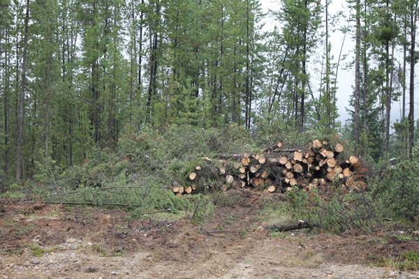 Valemount Community Forest pitches landscape firebreak