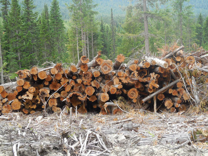 McBride Community Forest logging operations on Bell Mountain stir controversy among locals