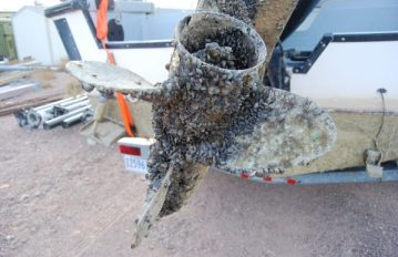 Photo: Flickr.com, courtesy of Alberta Gov Seen here is propeller infested with Quagga Mussels, an invasive species.