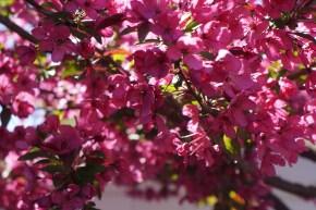 Flowers of Spring 2013