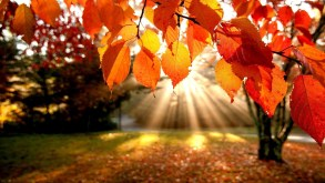 Daily Prompt: Autum Leaves