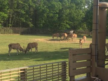 Safari shot.