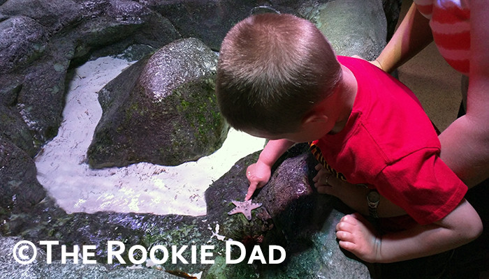 Sea Life Kansas City - The Rookie Dad