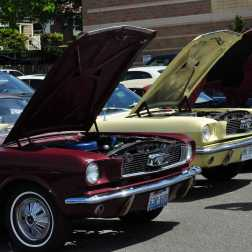 Vehicles at the car show, hoods popped