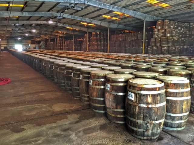 Rows of Tabasco Mash in Barrels