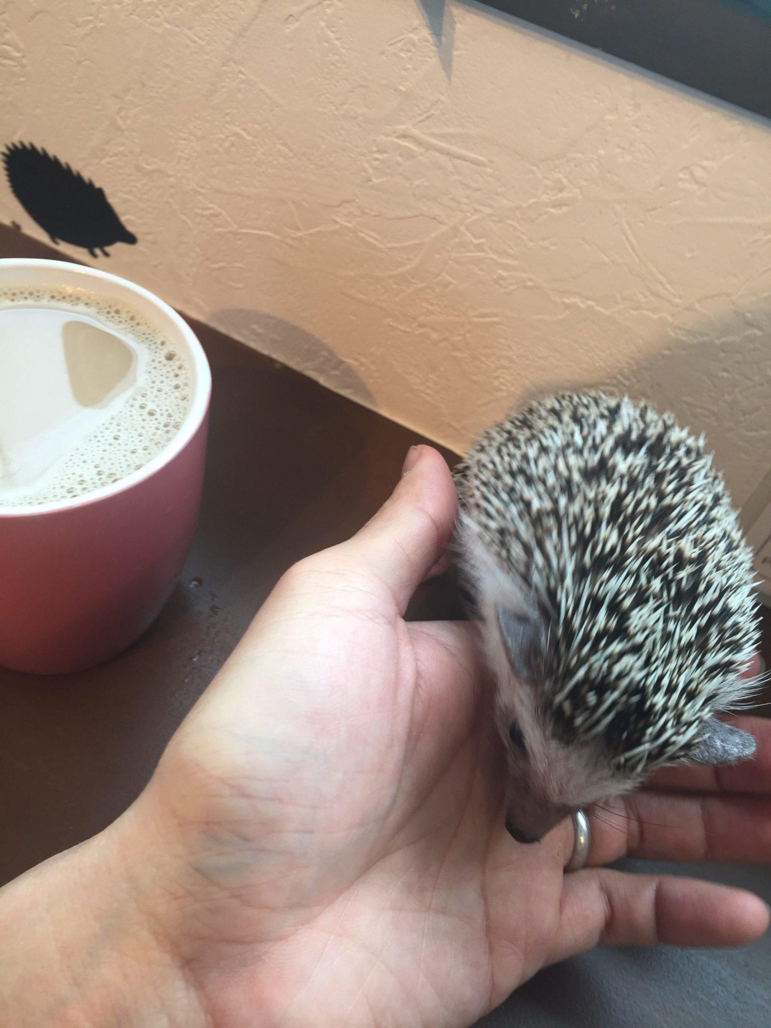 Harry hedgehog cafe - pokey and Halef
