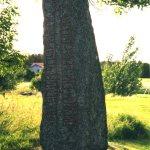 Vg 150 - 1998