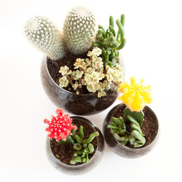 DIY Succulent and Cactus Terrariums