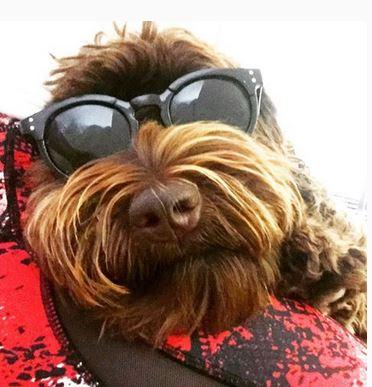 Savvy Pets, 9/20/19: Presenting Bailey, the Australian Labradoodle!