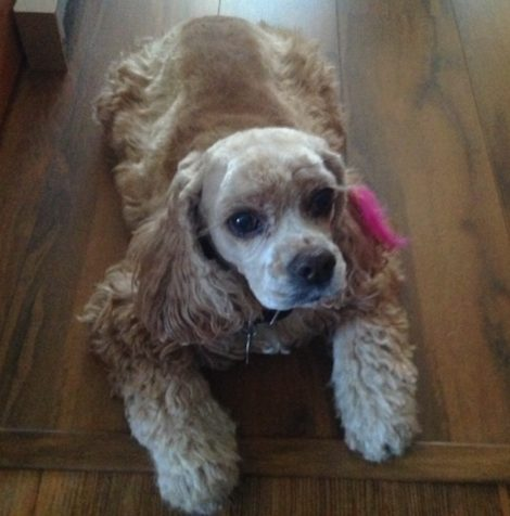 Savvy Pets, 6/12/20:  In Loving Memory, dear Samantha … and Dogs Paw Preference?