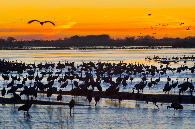 the annual sandhill crane migration is one the top things to do in Nebraska