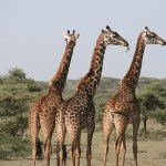 Most Cost Effective Destinations for Wildlife Enthusiasts