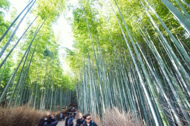 Arashiyama is a must on any Kyoto bucket list
