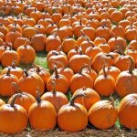 Best Things to Do for Halloween in Chicago