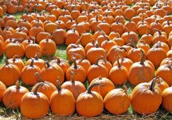 things to do on Halloween in Chicago IL