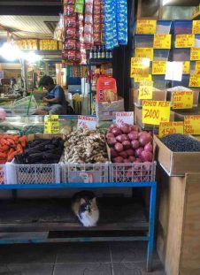 Santiago - Vega Markets
