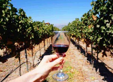 Santiago - Wine Tasting Tour