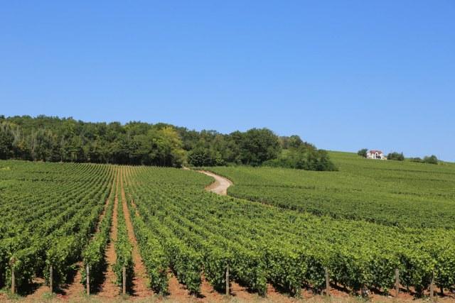 Burgundy Wine Region France road trip