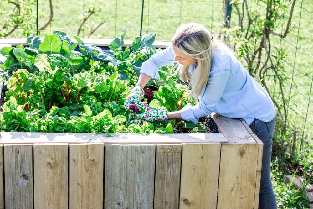 working in raised garden