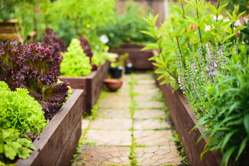 multiple raised gardens