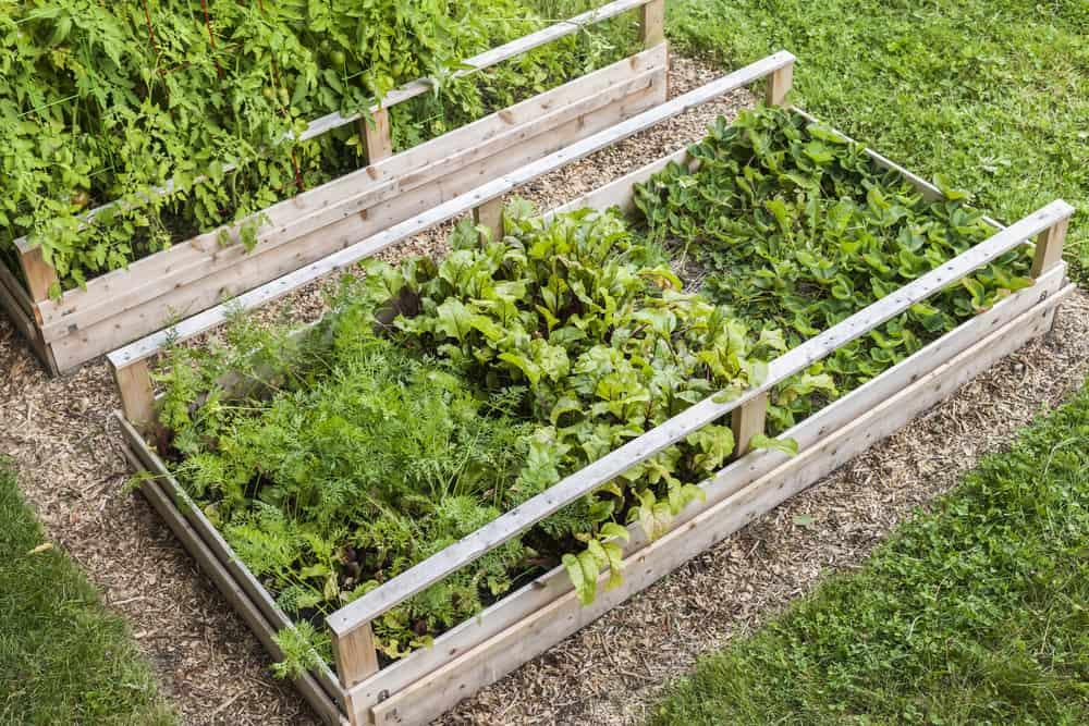railed raised garden