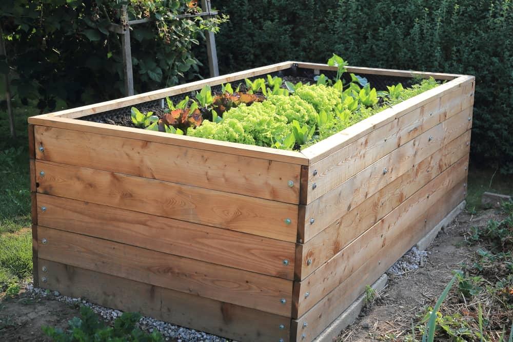 high wooden raised garden