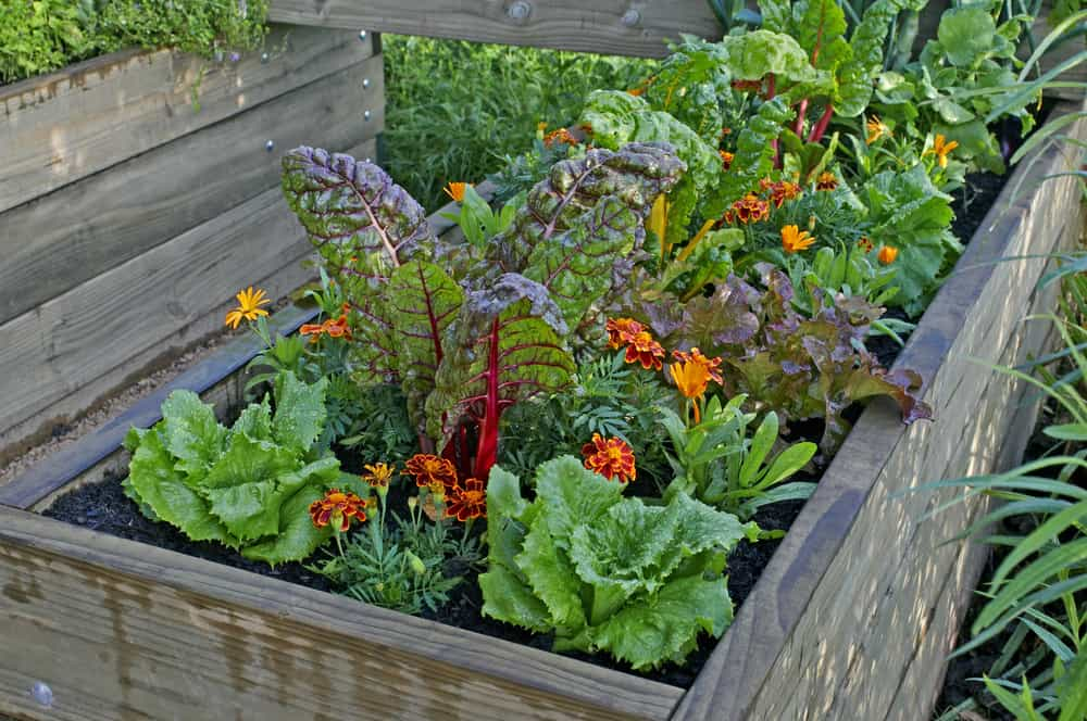 small multicolored garden