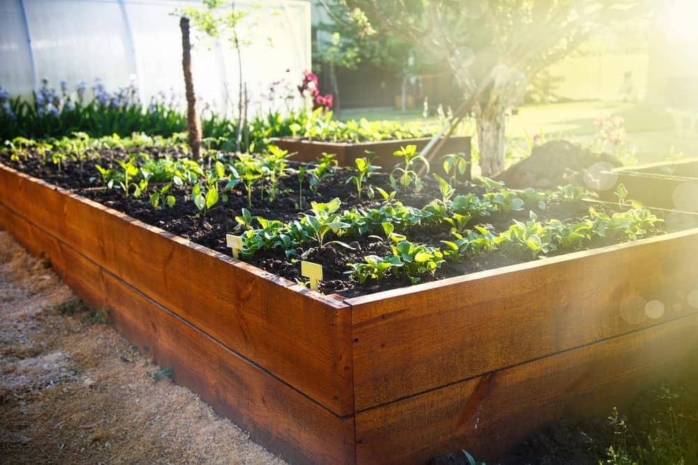 polished wood garden box
