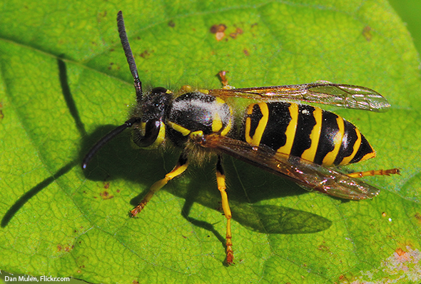 """Don't """"Bee"""" Afraid: A Guide to Distinguishing Among Bees ..."""