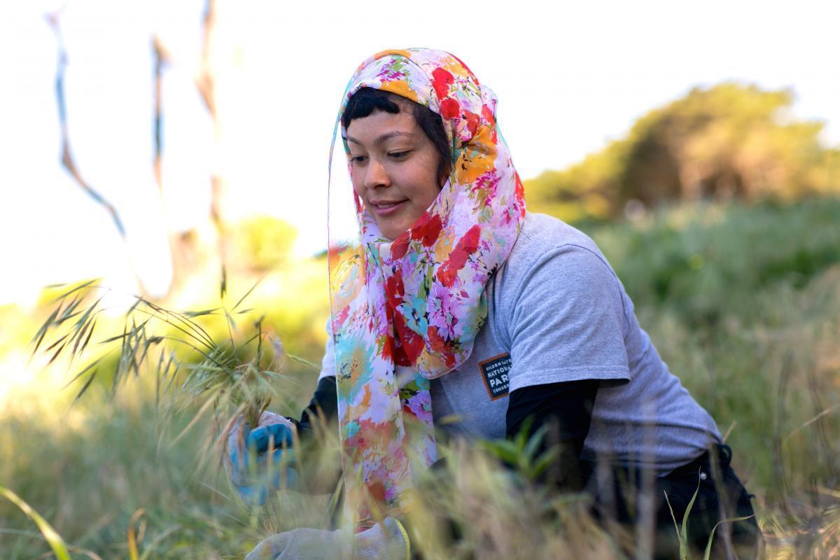 A volunteer pulls invasive grasses at Lands End