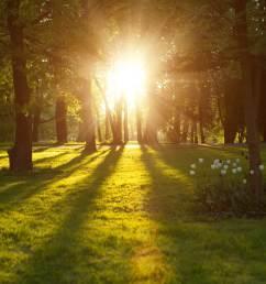 What is light?   TheSchoolRun [ 1067 x 1600 Pixel ]