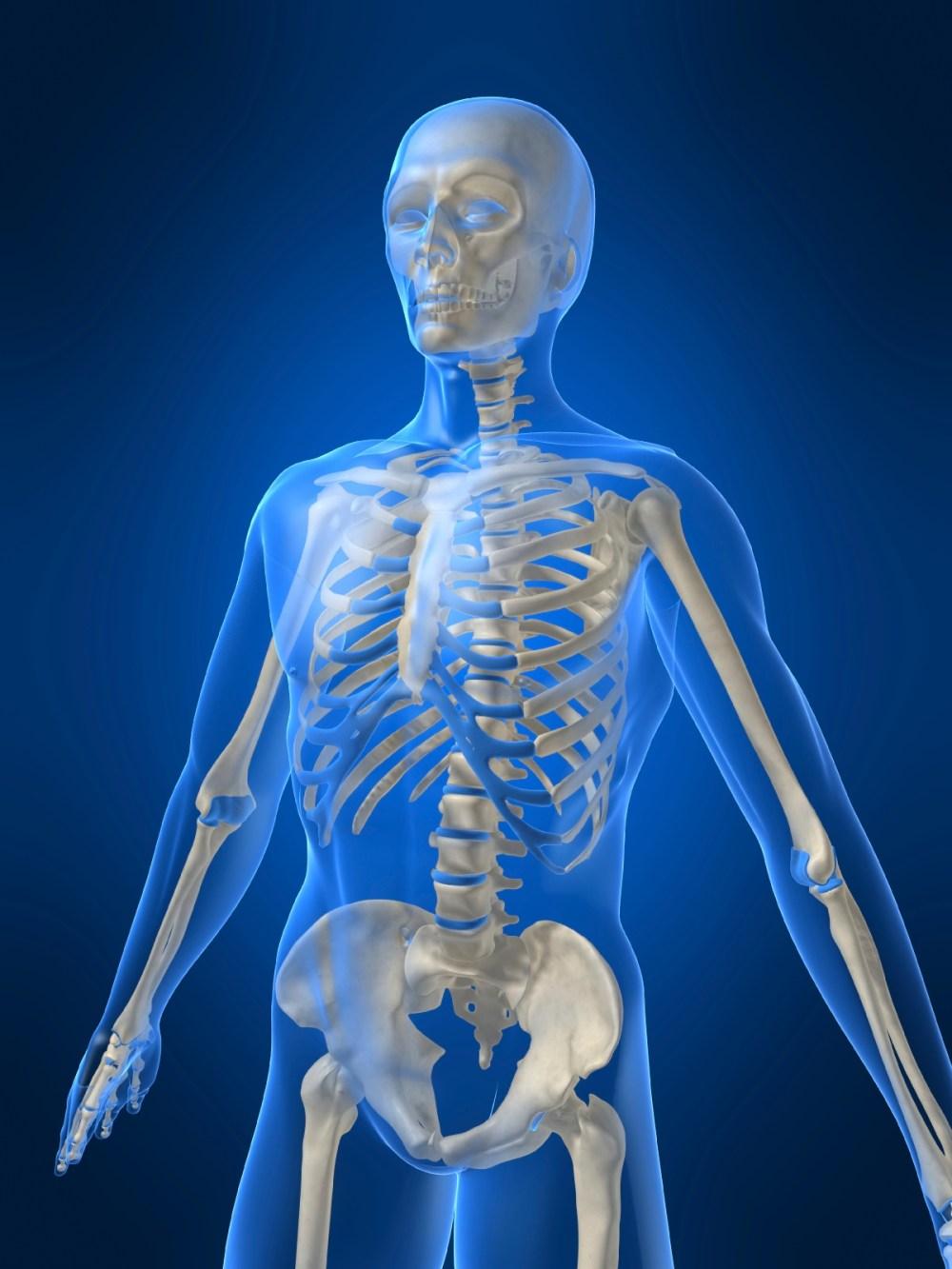 medium resolution of Bones and muscles   TheSchoolRun