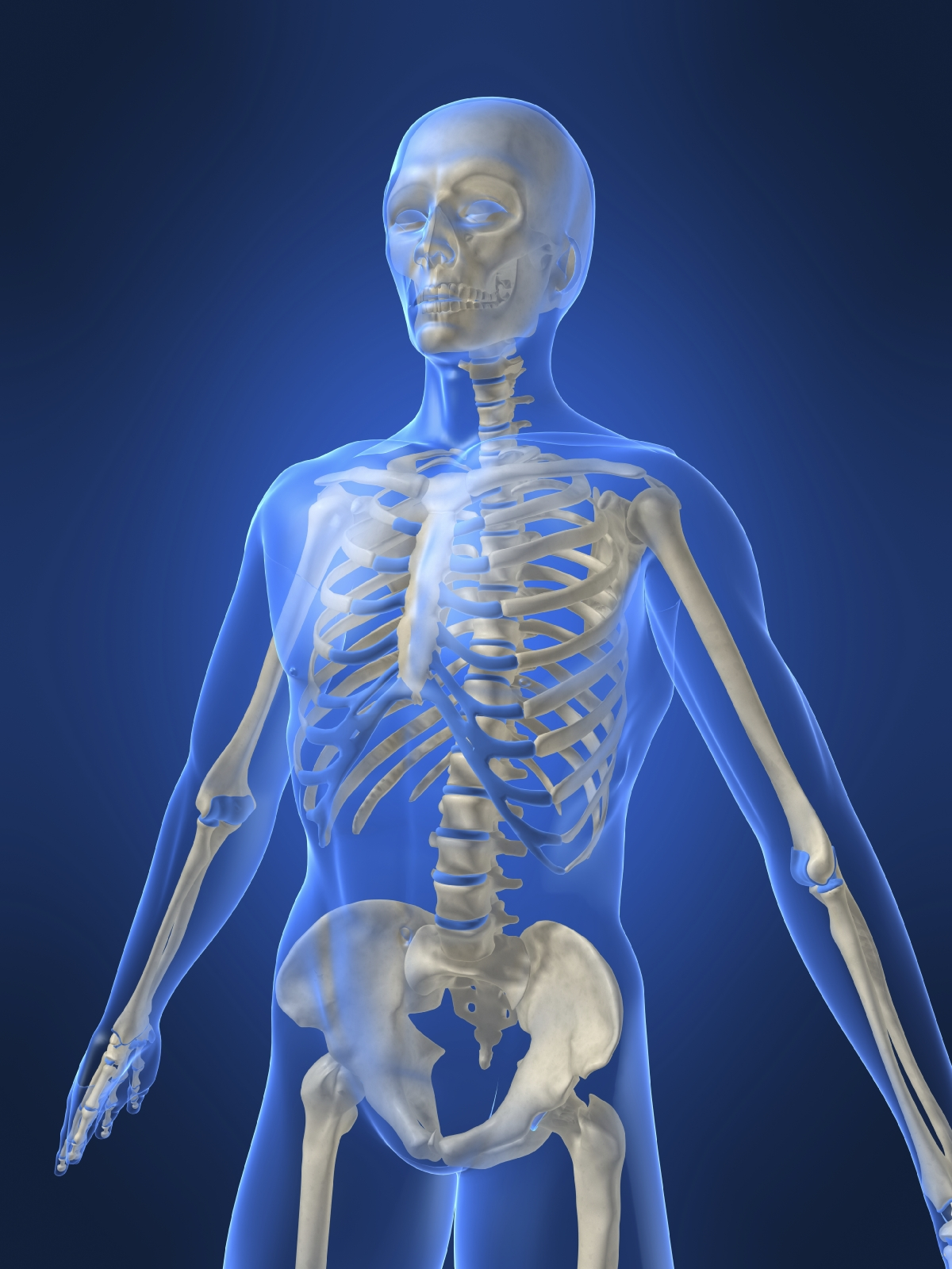 hight resolution of Bones and muscles   TheSchoolRun
