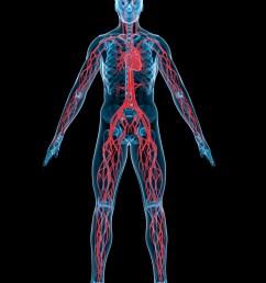 Human circulatory system   TheSchoolRun [ 1600 x 1200 Pixel ]