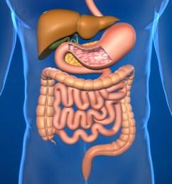 Human digestive system   TheSchoolRun [ 1385 x 1386 Pixel ]